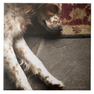 Sleeping Llewelyn setter Ceramic Tile
