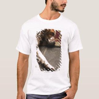 Sleeping Llewelyn setter T-Shirt