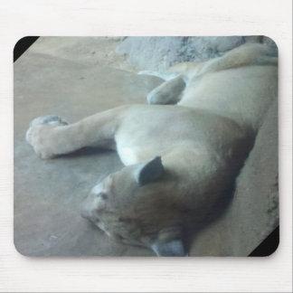 Sleeping loin mouse pad.