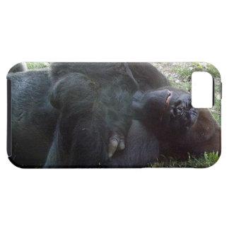 Sleeping Lowland Gorilla Kansas City Zoo iPhone 5 Cover