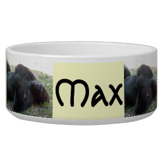 Sleeping Lowland Gorilla Kansas City Zoo Dog Bowl