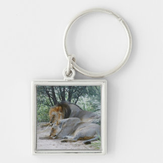 sleeping male lion and lioness, Panthera leo, Keychain