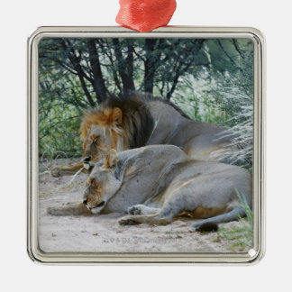 sleeping male lion and lioness, Panthera leo, Metal Ornament
