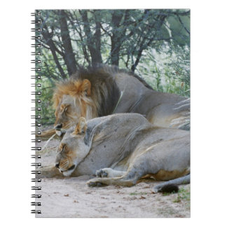 sleeping male lion and lioness, Panthera leo, Note Books