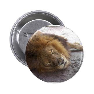 Sleeping male lion head view photograph button