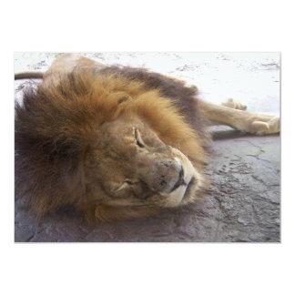 Sleeping male lion head view photograph card