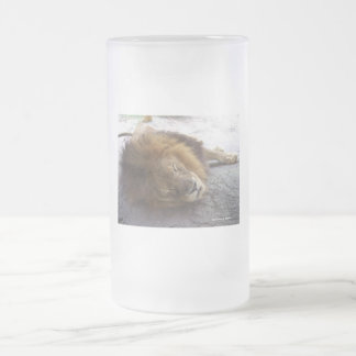 Sleeping male lion head view photograph frosted glass beer mug