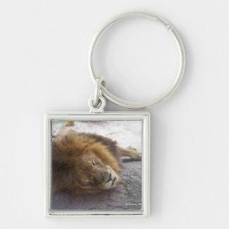 Sleeping male lion head view photograph keychain