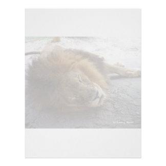 Sleeping male lion head view photograph letterhead