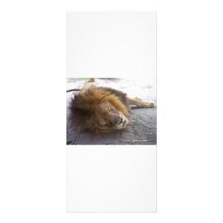 Sleeping male lion head view photograph rack card