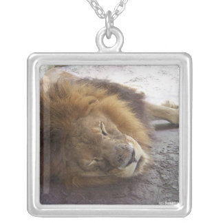 Sleeping male lion head view photograph silver plated necklace