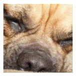 Sleeping Mastiff  Invitations