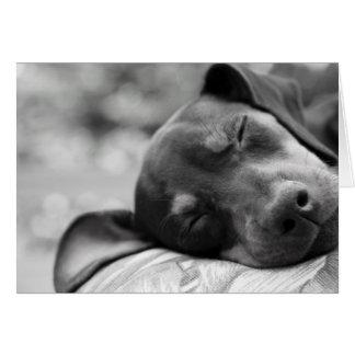 Sleeping Miniature Pinscher dog Card
