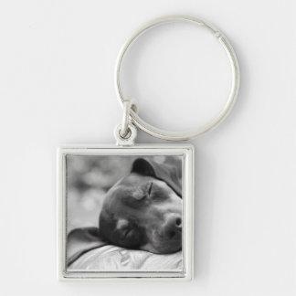Sleeping Miniature Pinscher dog Keychain
