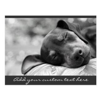 Sleeping Miniature Pinscher dog Postcard