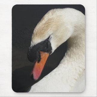 Sleeping Mute Swan Close-up Mousepad