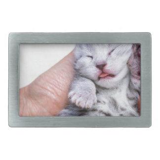Sleeping newborn  silver tabby cat in hand belt buckle