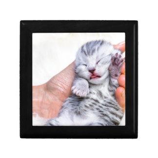 Sleeping newborn  silver tabby cat in hand jewelry box