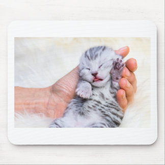 Sleeping newborn  silver tabby cat in hand mouse pad