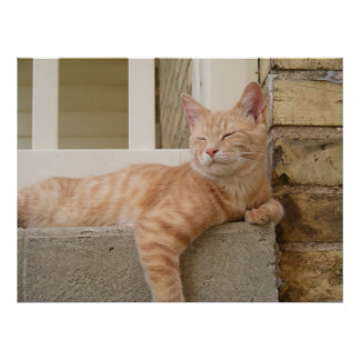 Sleeping Orange Cat Poster