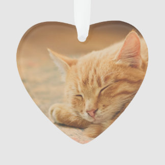 Sleeping Orange Tabby Cat