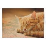Sleeping Orange Tabby Cat Greeting Card