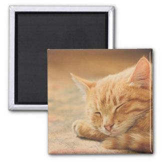 Sleeping Orange Tabby Cat Magnet
