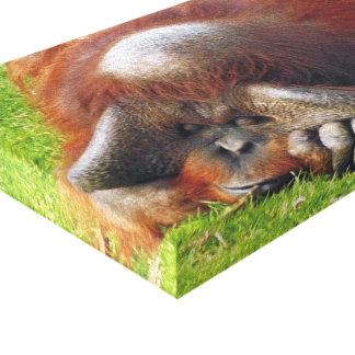 Sleeping Orangutan Funny Canvas Print