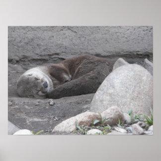 Sleeping Otter Poster