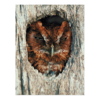 Sleeping Owl in a Tree Postcard