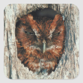 Sleeping Owl in a Tree Square Sticker