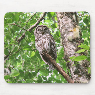 Sleeping Owl in the Wild Mouse Pad
