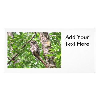 Sleeping Owl in the Wild Photo Greeting Card