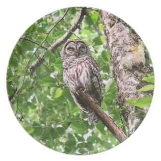 Sleeping Owl in the Wild Plate