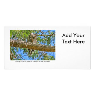 Sleeping Owl Photo Cards