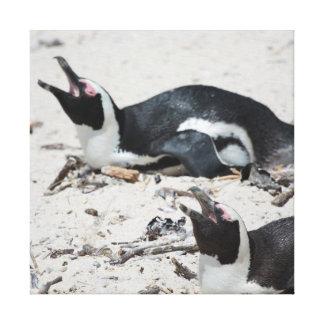 Sleeping Penguins Canvas Print
