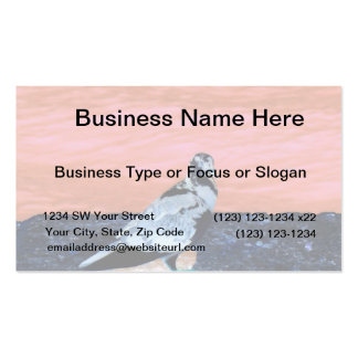 sleeping pied pigeon coral wall blue river invert business card