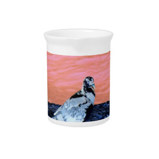 sleeping pied pigeon coral wall blue river invert drink pitcher