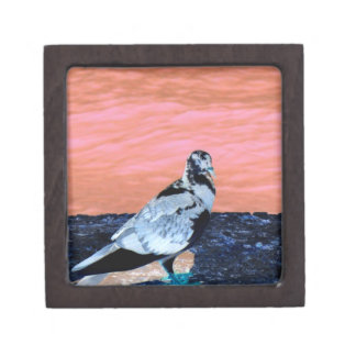 sleeping pied pigeon coral wall blue river invert jewelry box