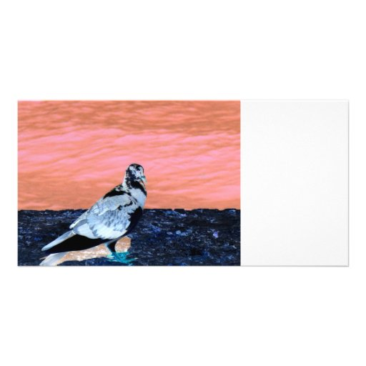 sleeping pied pigeon coral wall blue river invert customized photo card
