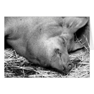 Sleeping Pig Black and White Photo - Blank Cards