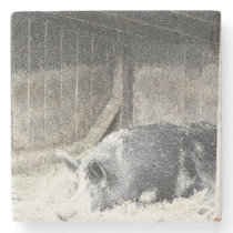 Sleeping Pig Stone Coaster