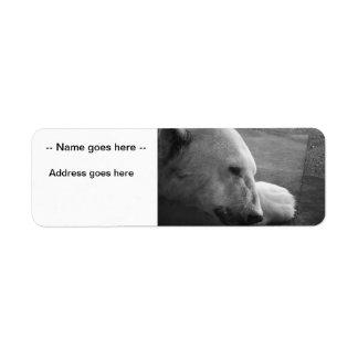 Sleeping Polar Bear Label