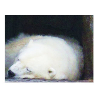 Sleeping Polar Bear Postcards