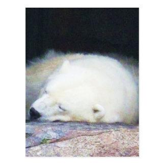 Sleeping Polar Bear Post Card