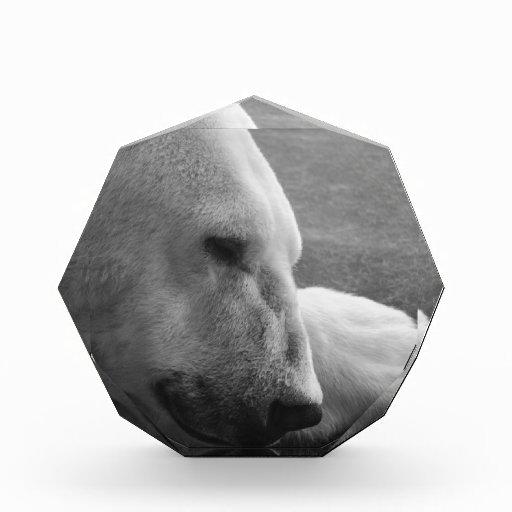 Sleeping Polarbear Acrylic Award