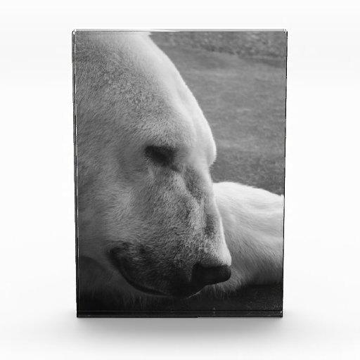 Sleeping Polarbear Awards