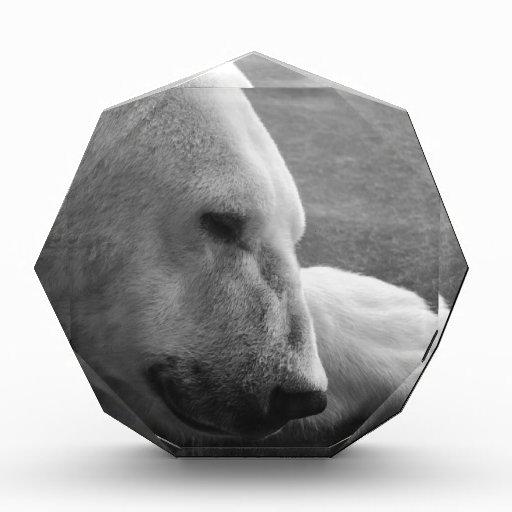 Sleeping Polarbear Award
