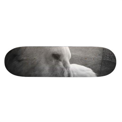 Sleeping Polarbear Skateboard Deck
