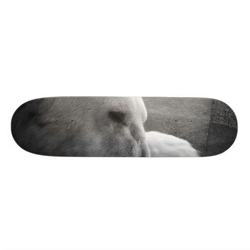 Sleeping Polarbear Skateboards